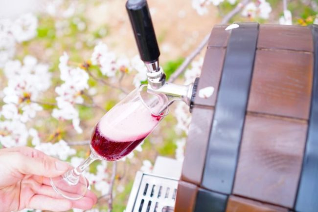 桜の下でジラモンド